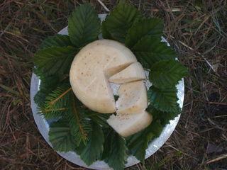formaggio_panda
